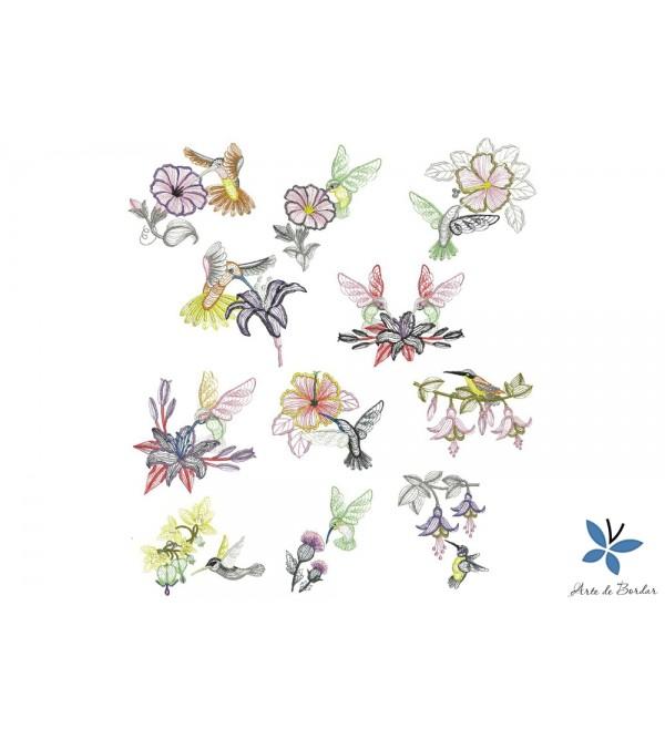 Hummingbird Colettion 001