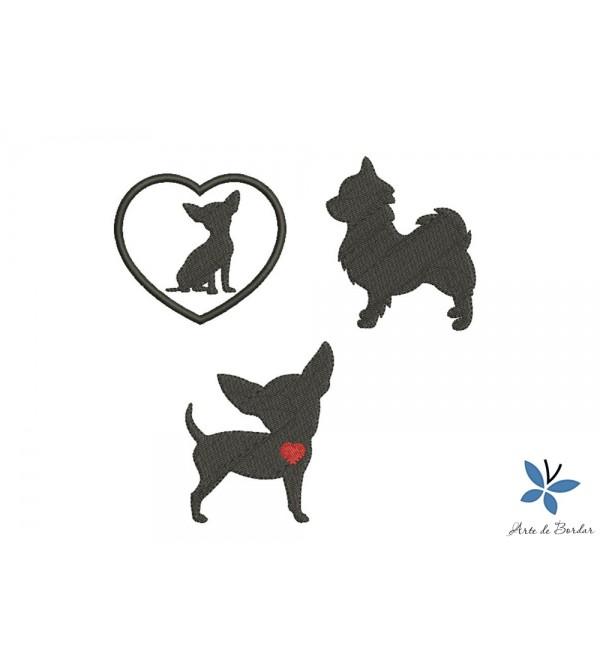 Chihuahua Puppies 001
